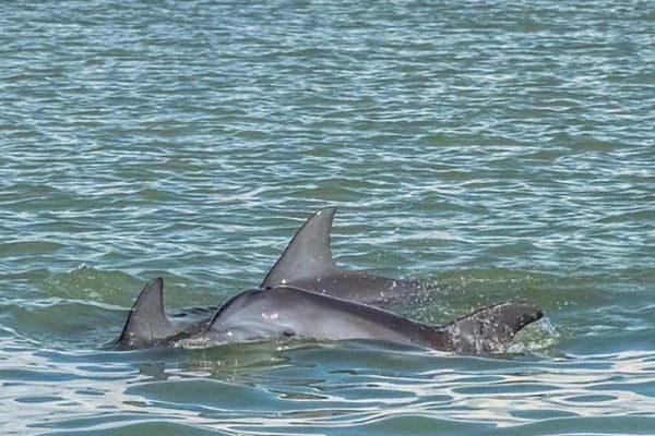 Delfines Ciudad del Carmen